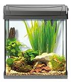Tetra AquaArt Discovery Line LED Aquarium-Komplett-Set 30 Liter anthrazit (inklusive LED-Beleuchtung, Tag- und Nachtlichtschaltung und EasyCrystal Innenfilter, ideal für Krebse und Garnelen) - 10