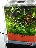 sera Biotop Nano LED Cube 16l ein Aquarium Komplettset – Plug & Play – aus gebogenem Glas mit LED Beleuchtung & großem 3-Kammer Innenfilter für Garnelen, Krebse und Kampffisch Maße (BxHxT) 22x30x25cm - 5