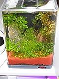 sera Biotop Nano LED Cube 16l ein Aquarium Komplettset – Plug & Play – aus gebogenem Glas mit LED Beleuchtung & großem 3-Kammer Innenfilter für Garnelen, Krebse und Kampffisch Maße (BxHxT) 22x30x25cm - 6