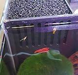 sera Biotop Nano LED Cube 16l ein Aquarium Komplettset – Plug & Play – aus gebogenem Glas mit LED Beleuchtung & großem 3-Kammer Innenfilter für Garnelen, Krebse und Kampffisch Maße (BxHxT) 22x30x25cm - 8