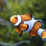 Meerwasseraquarium einrichten