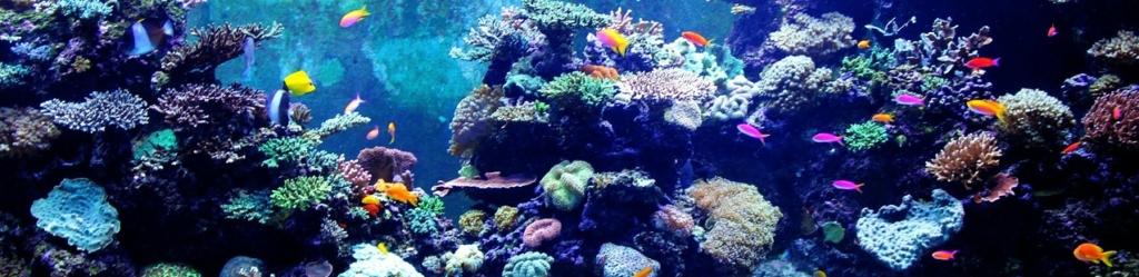 meerwasseraquarium tipps kaufempfehlungen. Black Bedroom Furniture Sets. Home Design Ideas
