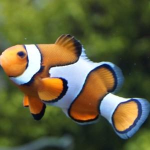Meerwasseraquarium Fische
