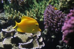 meerwasseraquariumtypen