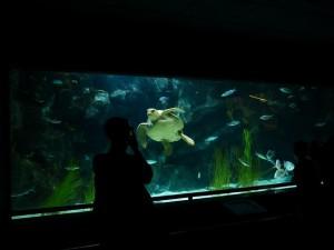 meerwasseraquarium beckengröße