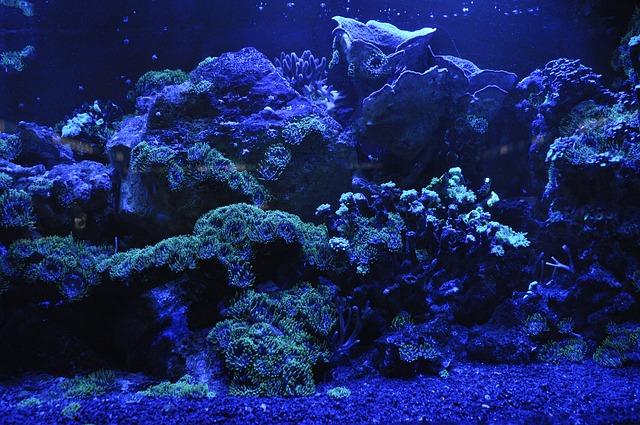Meerwasseraquarium Beleuchtung - Ihr Meerwasseraquarium Portal!