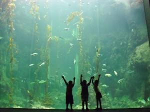 meerwasseraquarium licht