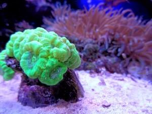meerwasseraquarium nano