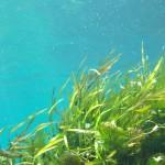 Meerwasseraquarium Pflanzen - dekorativ, aber anspruchsvoll