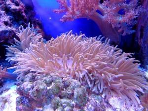 Korallen kaufen