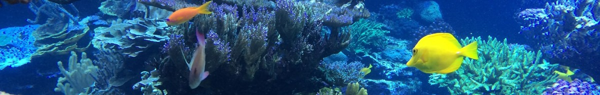 meerwasseraquarium-info.de