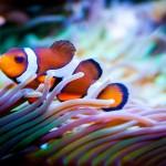 Meerwasseraquarium Technik