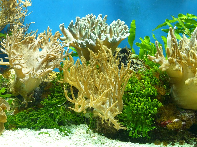 meerwasseraquarium einfahren ihr meerwasseraquarium portal. Black Bedroom Furniture Sets. Home Design Ideas