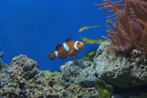 meerwasseraquarium wasserwechsel
